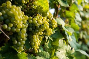 Firmeneintrag Weinviertel vor Wien ansehen